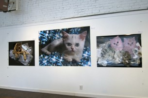 Diamond Cat, Daiyamondo Neko, and Diamond Cats